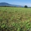 Terrenos Agricolas en la Comunidad de Chalona, San Juan de la Maguana.